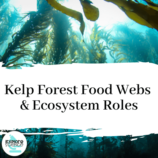 Kelp Forest Food Webs and Ecosystem Roles