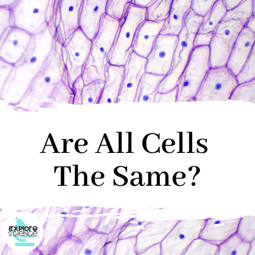 Are All Cells The Same?