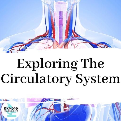 Exploring The Circulatory System
